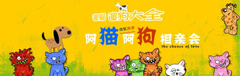 搜狐旅游春季系列专题·阿猫阿狗相亲会-遛猫遛狗大全