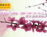 周末游第六期:北京春季赏花大全