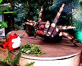 广州跨世纪机器人博览会,森林世界蜘蛛 Tarantula