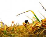 可灌溉耕地再减少,将影响粮食安全