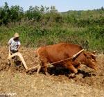 重新认识耕地:能收获粮食的才叫耕地