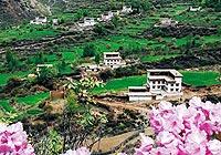 西藏色季拉山:杜鹃花海气势壮观