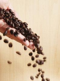 咖啡豆诞生记