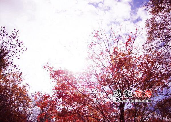 """红叶谷的""""连天红"""""""