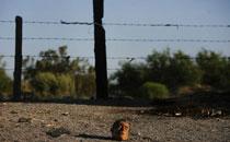 三等奖:墨西哥毒品战争