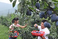 富恒农业观光园:采摘节