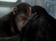 猿族领袖凯撒的情感故事