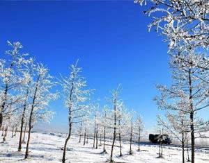 内蒙古牙克石市现雾凇美景 犹如童话世界
