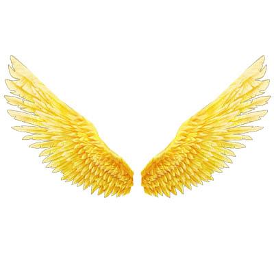 翅膀:金羽
