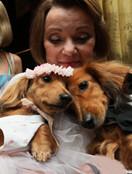 纽约狗狗婚礼 盛装打扮甜蜜奢华