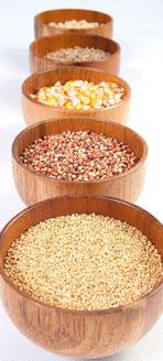 小米玉米薏米
