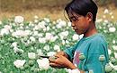 缅甸神秘金三角地区 揭凶残毒贩生存状态