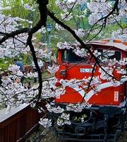 三月到台湾赏花