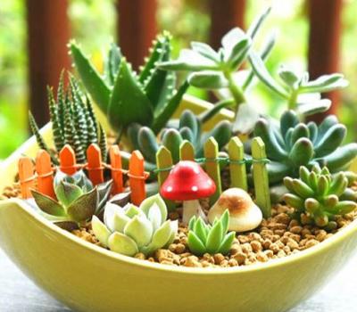 绿植盆栽加湿加氧