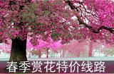 春日赏樱特价线路