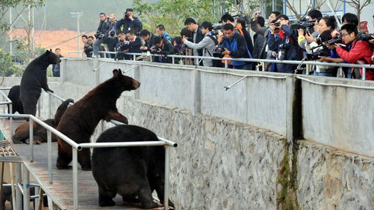 """<b>组图:直击归真堂首个开放日 记者见证""""活熊取胆""""</b>"""