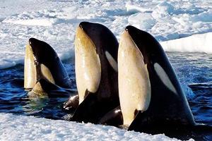 冰冻星球:震撼人心的北极风光