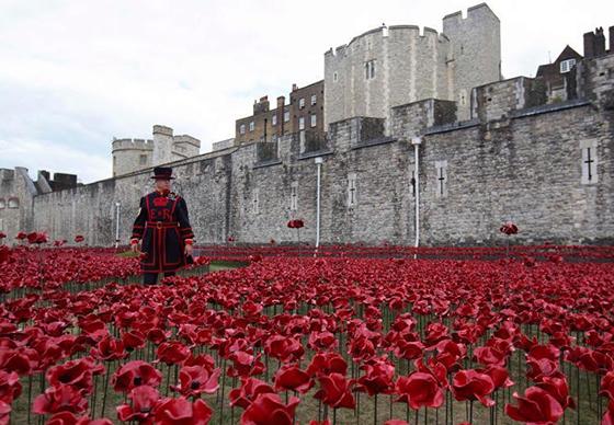 英伦敦塔盛开80万朵罂粟纪念一战