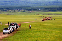 乌兰布统的马和羊