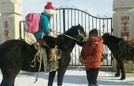 内蒙古穿袍学生骑马上学