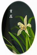 蕙芳园拍兰花
