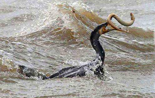 新疆喀纳斯湖的史前巨兽