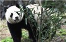 海归大熊猫入住新家