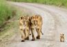 动物王国的温情