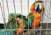 男子偷18只鹦鹉带鸟自首