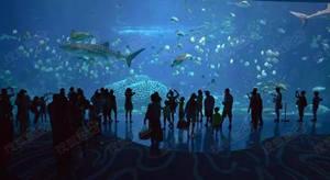 看泸州欢乐海底世界!如何惊艳川南所有人?