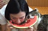 猫主子带猫奴一起吃西瓜