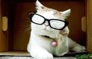 猫咪变时尚教主凹造型