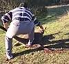 男子19刀虐杀袋鼠