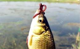 钓鱼自媒体