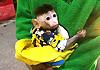 夫妻因猕猴太可爱偷带回家当宠物
